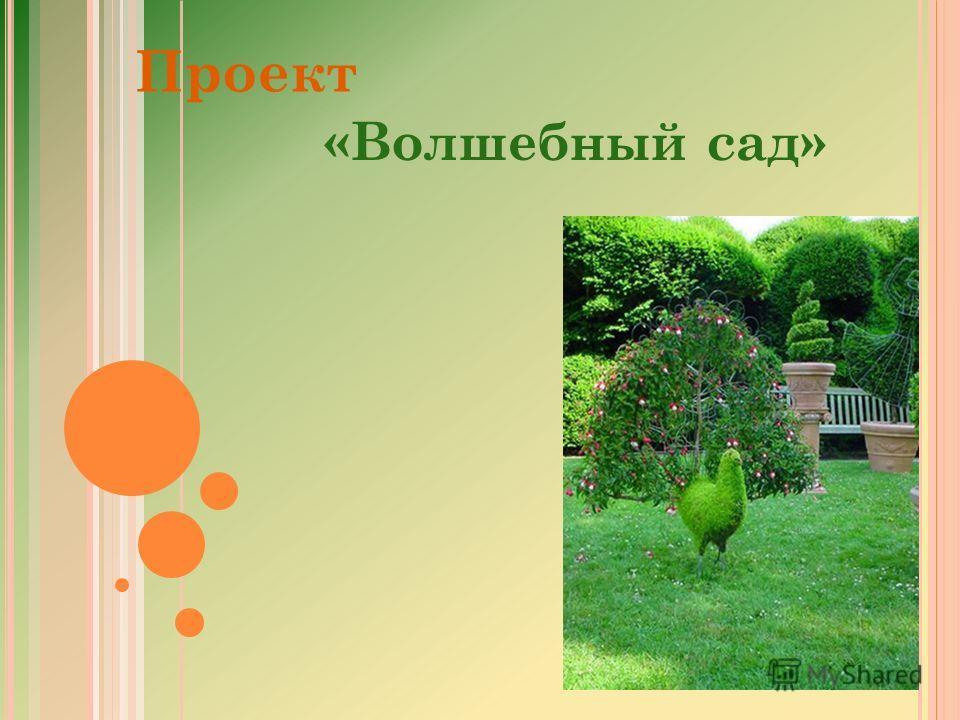 Проект «Волшебный сад»