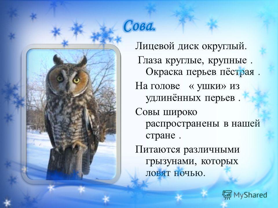 Лицевой диск округлый. Глаза круглые, крупные. Окраска перьев пёстрая. На голове « ушки» из удлинённых перьев. Совы широко распространены в нашей стране. Питаются различными грызунами, которых ловят ночью.