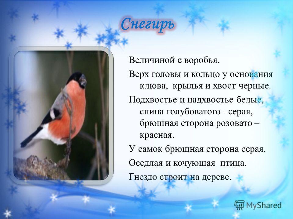 Величиной с воробья. Верх головы и кольцо у основания клюва, крылья и хвост черные. Подхвостье и надхвостье белые, спина голубоватого –серая, брюшная сторона розовато – красная. У самок брюшная сторона серая. Оседлая и кочующая птица. Гнездо строит н