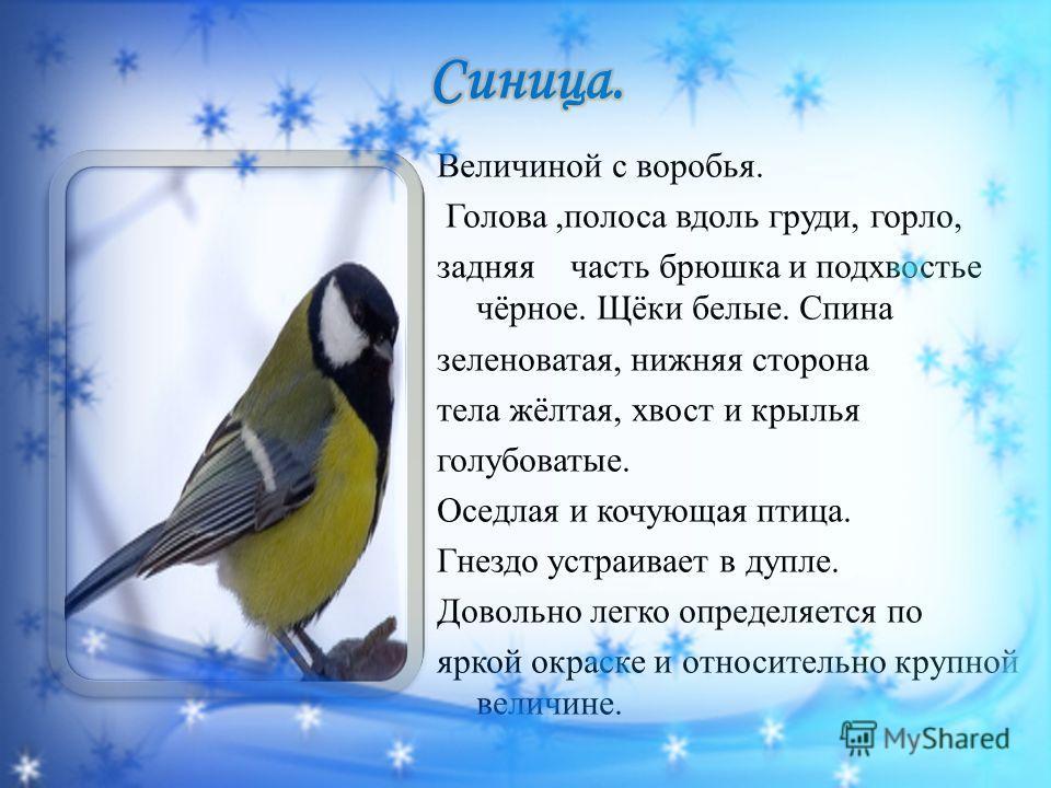 Величиной с воробья. Голова,полоса вдоль груди, горло, задняя часть брюшка и подхвостье чёрное. Щёки белые. Спина зеленоватая, нижняя сторона тела жёлтая, хвост и крылья голубоватые. Оседлая и кочующая птица. Гнездо устраивает в дупле. Довольно легко
