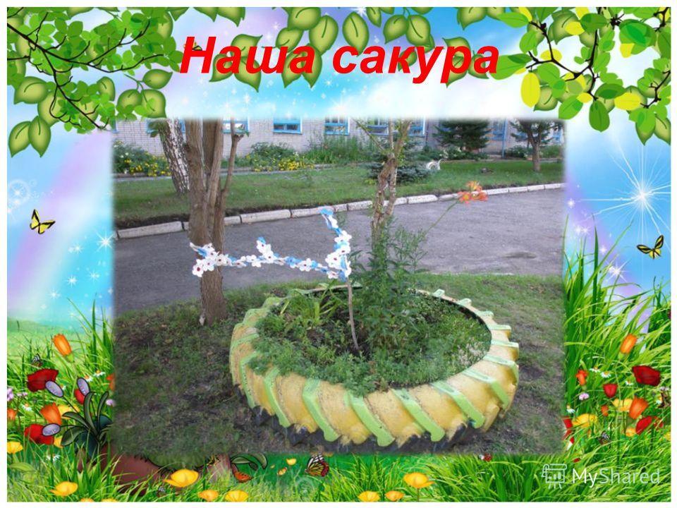 Наша сакура