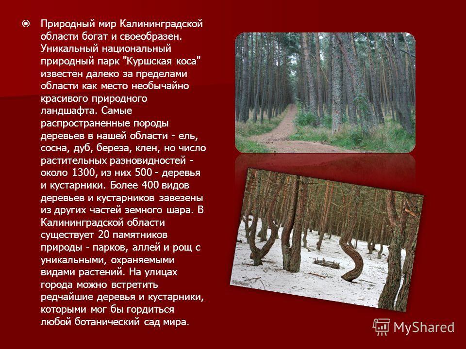 Природный мир Калининградской области богат и своеобразен. Уникальный национальный природный парк