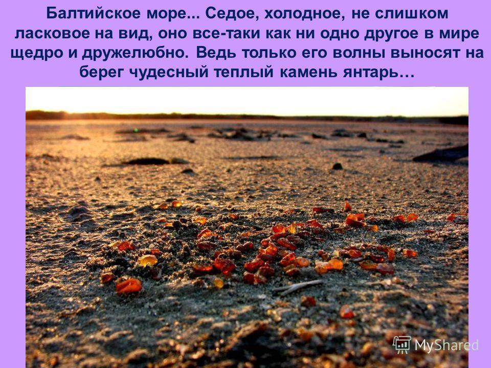 Балтийское море... Седое, холодное, не слишком ласковое на вид, оно все-таки как ни одно другое в мире щедро и дружелюбно. Ведь только его волны выносят на берег чудесный теплый камень янтарь…