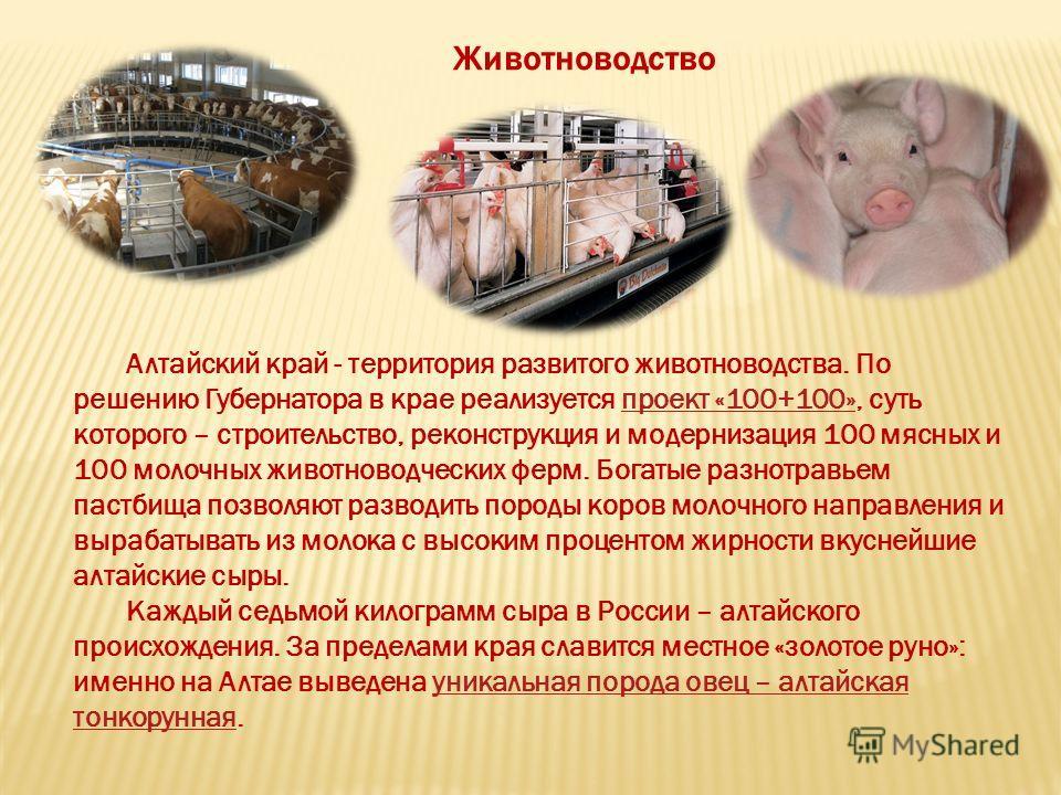 Алтайский край - территория развитого животноводства. По решению Губернатора в крае реализуется проект «100+100», суть которого – строительство, реконструкция и модернизация 100 мясных и 100 молочных животноводческих ферм. Богатые разнотравьем пастби