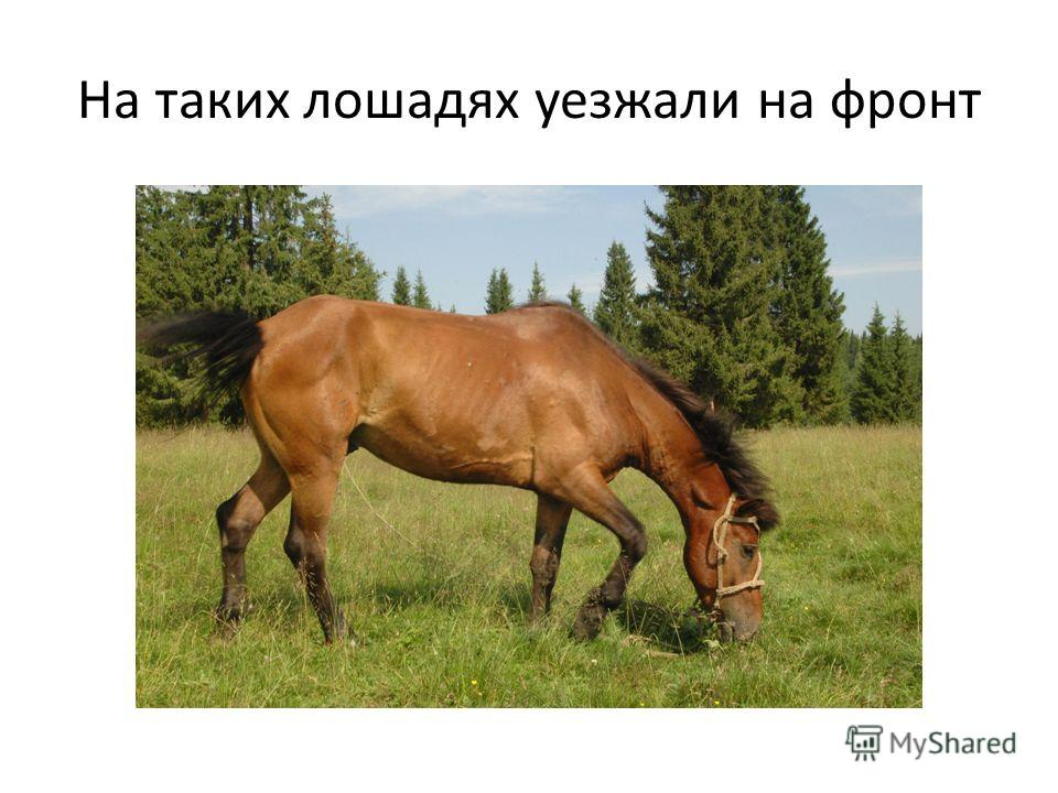 На таких лошадях уезжали на фронт