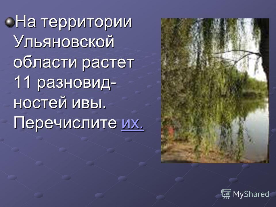 На территории Ульяновской области растет 11 разновидностей ивы. Перечислите их. их.