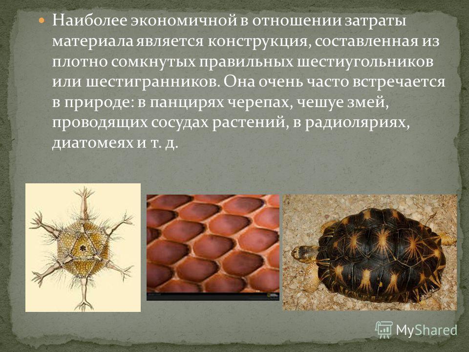 Наиболее экономичной в отношении затраты материала является конструкция, составленная из плотно сомкнутых правильных шестиугольников или шестигранников. Она очень часто встречается в природе: в панцирях черепах, чешуе змей, проводящих сосудах растени