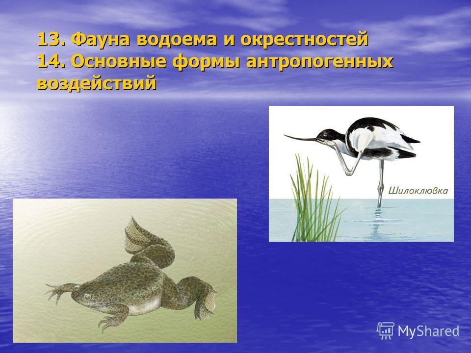 13. Фауна водоема и окрестностей 14. Основные формы антропогенных воздействий
