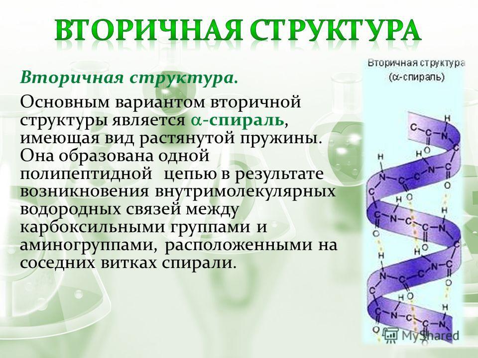 Вторичная структура. Основным вариантом вторичной структуры является -спираль, имеющая вид растянутой пружины. Она образована одной полипептидной цепью в результате возникновения внутримолекулярных водородных связей между карбоксильными группами и ам