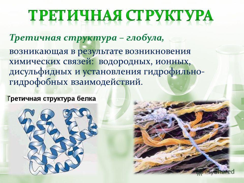 Третичная структура – глобула, возникающая в результате возникновения химических связей: водородных, ионных, дисульфидных и установления гидрофильно- гидрофобных взаимодействий.