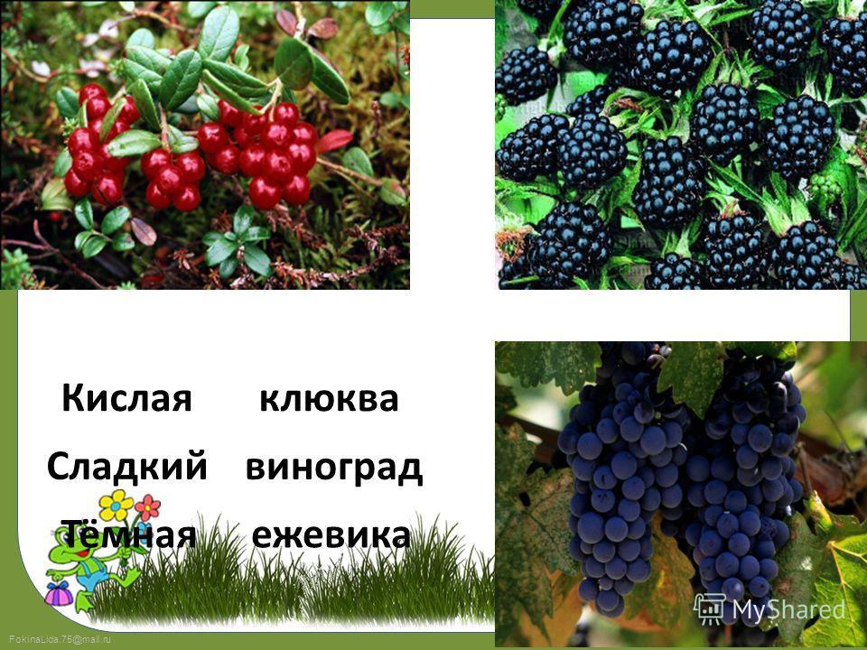FokinaLida.75@mail.ru 23 Тёмная Кислая Сладкий клюква виноград ежевика