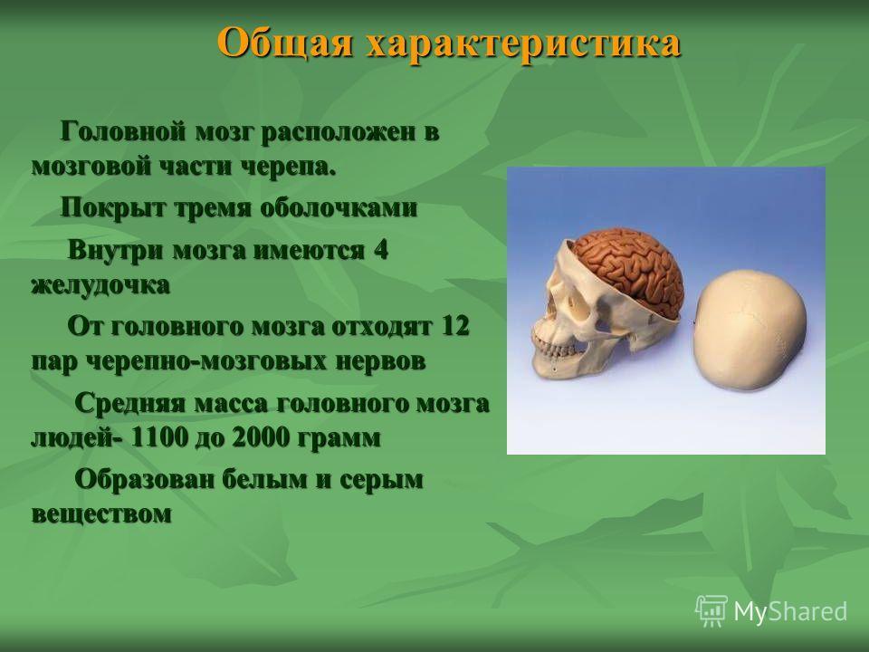 Общая характеристика Головной мозг расположен в мозговой части черепа. Головной мозг расположен в мозговой части черепа. Покрыт тремя оболочками Покрыт тремя оболочками Внутри мозга имеются 4 желудочка Внутри мозга имеются 4 желудочка От головного мо