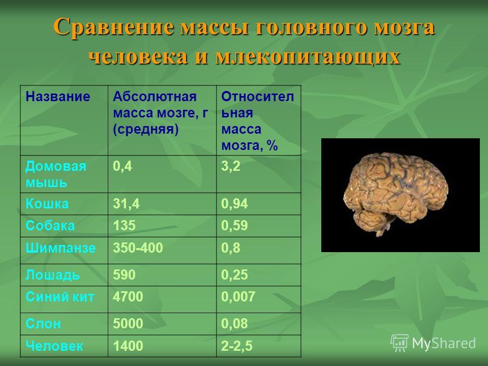 Сравнение массы головного мозга человека и млекопитающих Название Абсолютная масса мозге, г (средняя) Относител ьная масса мозга, % Домовая мышь 0,43,2 Кошка 31,40,94 Собака 1350,59 Шимпанзе 350-4000,8 Лошадь 5900,25 Синий кит 47000,007 Слон 50000,08
