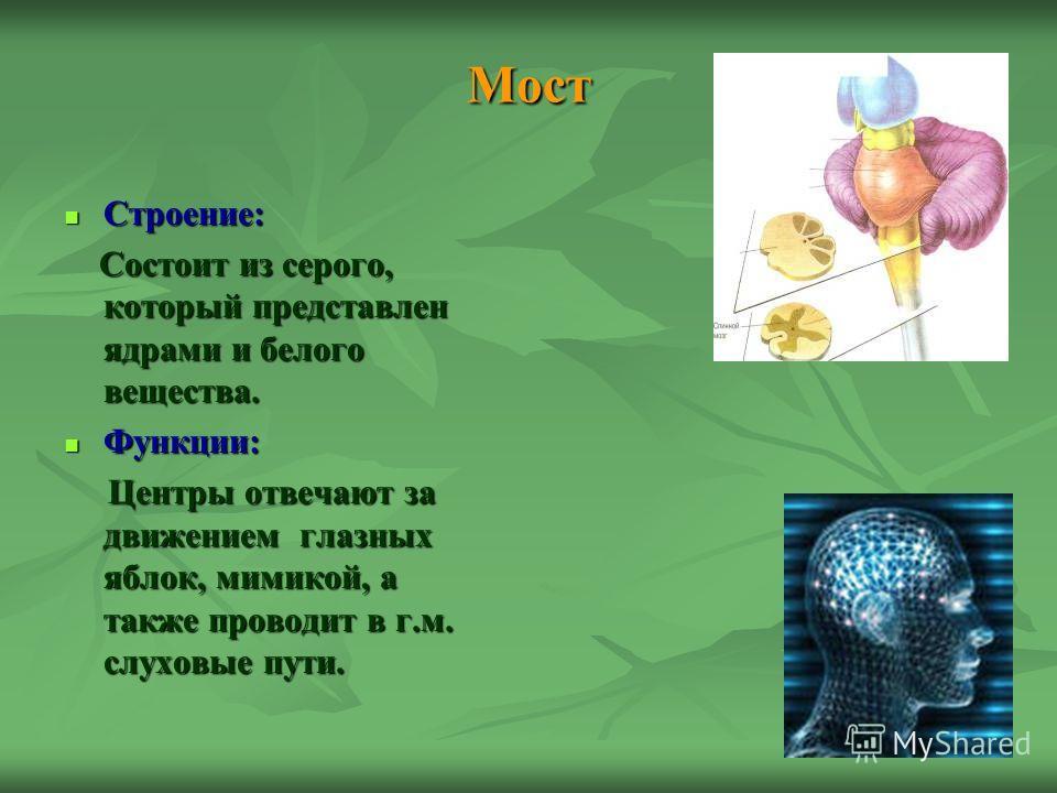 Мост Строение: Строение: Состоит из серого, который представлен ядрами и белого вещества. Состоит из серого, который представлен ядрами и белого вещества. Функции: Функции: Центры отвечают за движением глазных яблок, мимикой, а также проводит в г.м.