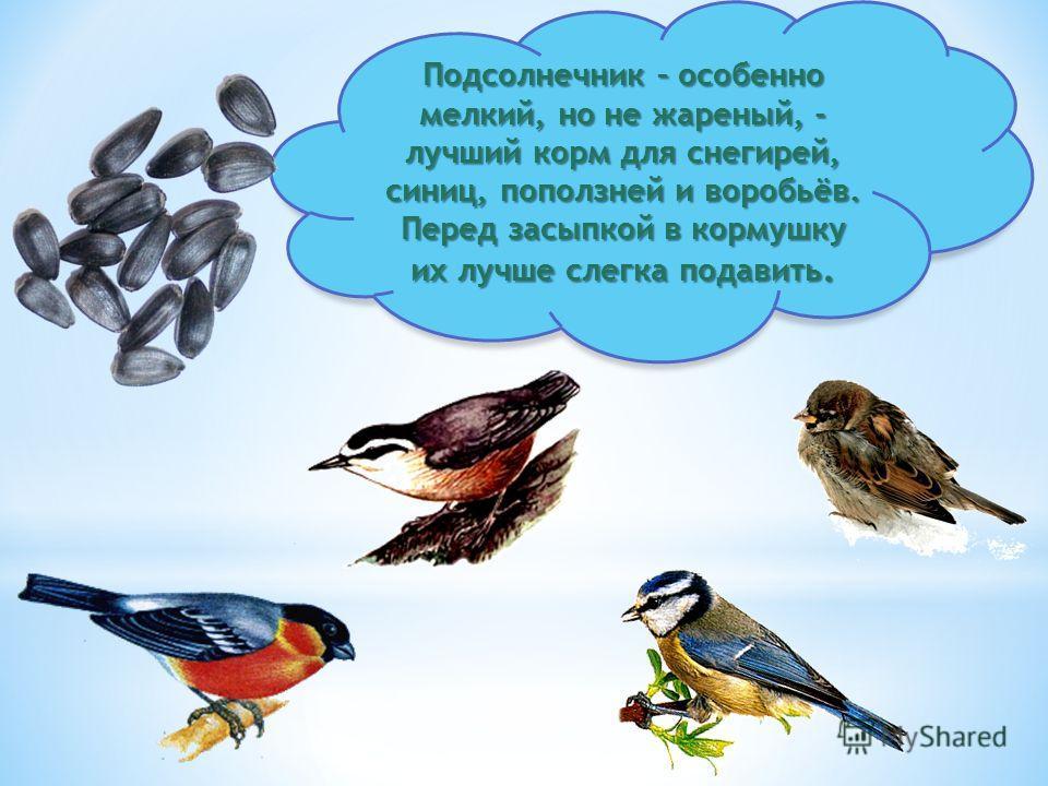 Кусочки сала годятся не всем птицам. Сало любят синички. Только сало не должно быть солёным. Овёс охотно съедят синицы, воробьи.
