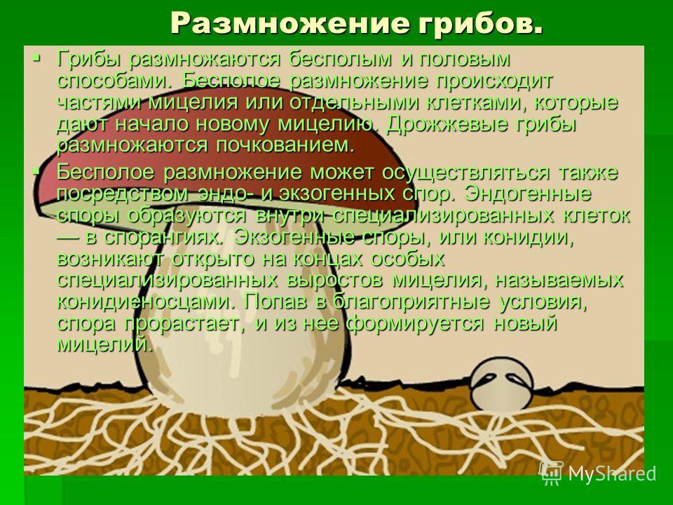 Строение грибов Строение грибов Высшие грибы состоят из мицелия. Толщина гиф от 1 до 20 мкм. На мицелии образуются плодовые тела. По внешним признакам шляпочных грибов определить почти все виды съедобных и ядовитых грибов.