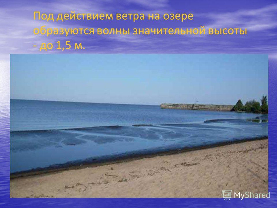 Свое же название озеро получило от вепсов (вепсы – это представители финно- угорской народности, проживающие около озера). На вепсском языке озеро называется «Vouktar», что обозначает «Белоозеро». Отсюда и пошло название Белое озеро.