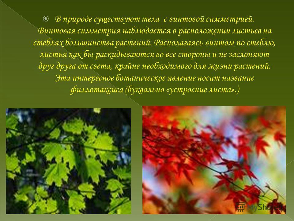 В природе существуют тела с винтовой симметрией. Винтовая симметрия наблюдается в расположении листьев на стеблях большинства растений. Располагаясь винтом по стеблю, листья как бы раскидываются во все стороны и не заслоняют друг друга от света, край