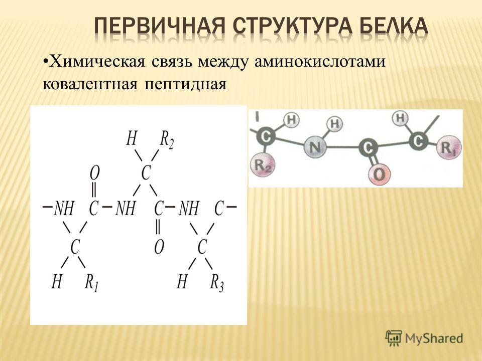 Химическая связь между аминокислотами ковалентная пептидная