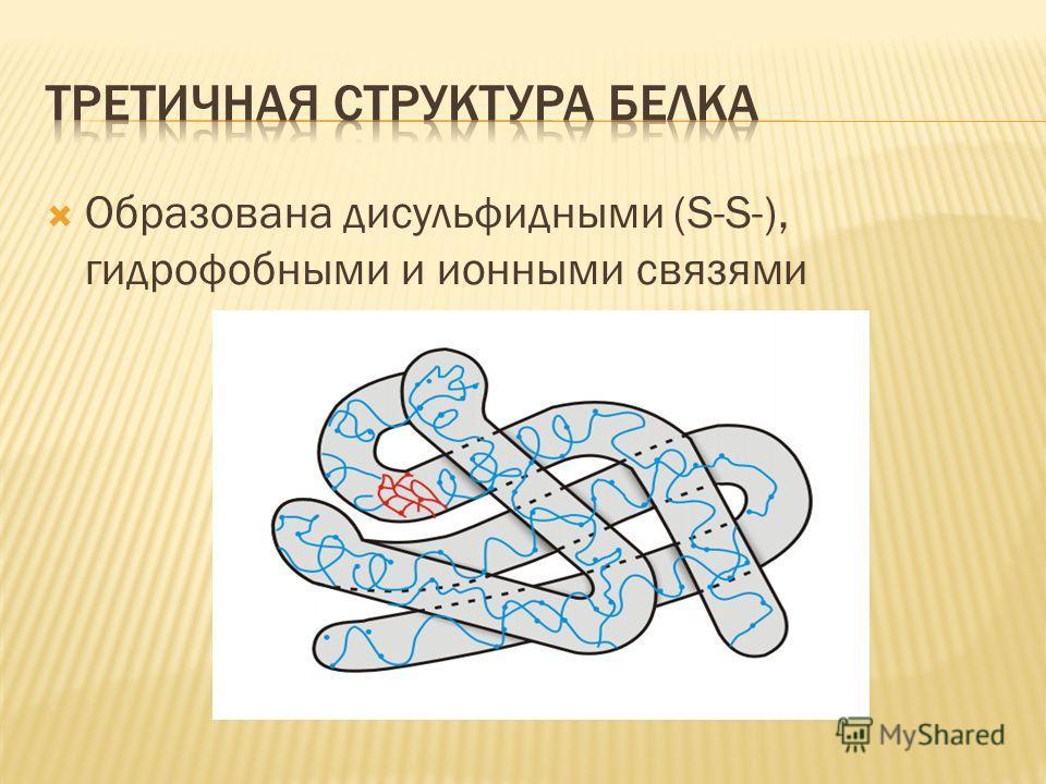 Образована дисульфидными (S-S-), гидрофобными и ионными связями