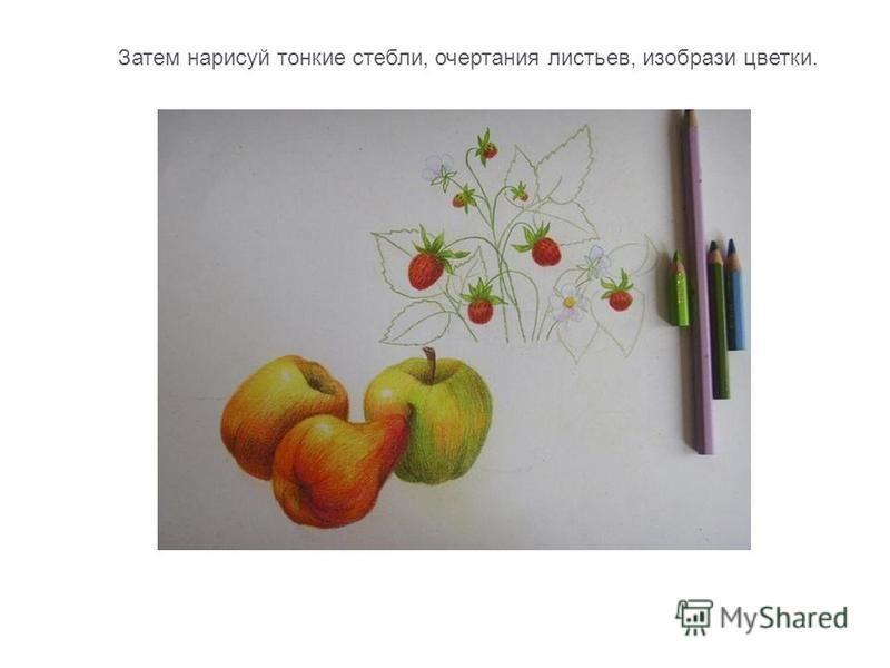 Затем нарисуй тонкие стебли, очертания листьев, изобрази цветки.