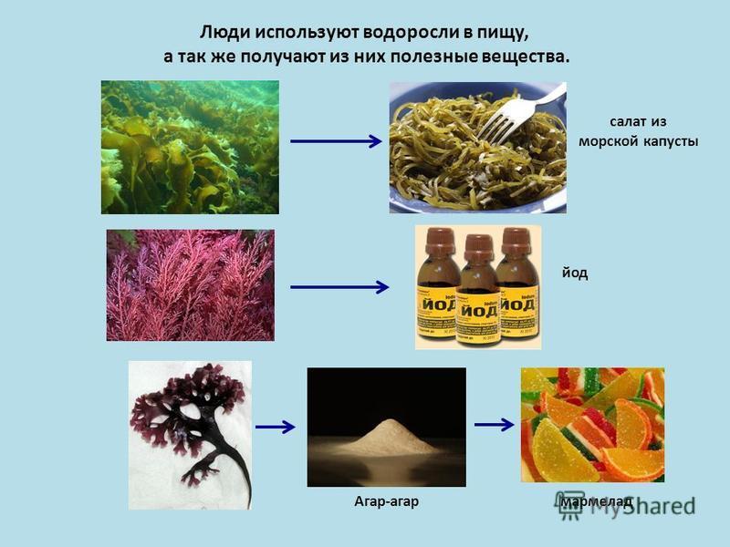 Люди используют водоросли в пищу, а так же получают из них полезные вещества. салат из морской капусты йод Агар-агар мармелад
