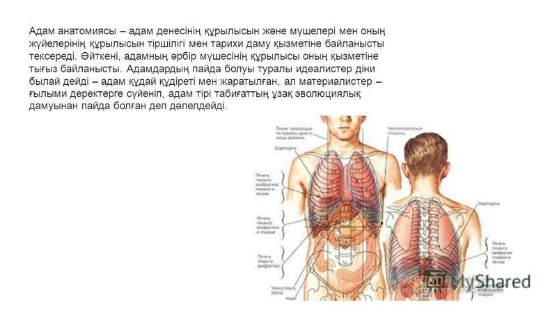 Адам анатомиясы – адам денесінің құрылысын және мүшелері мен оның жүйелерінің құрылысын тіршілігі мен тарихи даму қызметіне байланысты тексереді. Өйткені, адамның әрбір мүшесінің құрылысы оның қызметіне тығыз байланысты. Адамдардың пайда болуы туралы