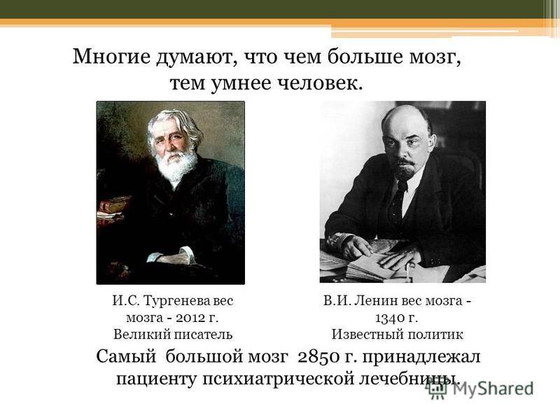И.С. Тургенева вес мозга - 2012 г. Великий писатель В.И. Ленин вес мозга - 1340 г. Известный политик Многие думают, что чем больше мозг, тем умнее человек. Самый большой мозг 2850 г. принадлежал пациенту психиатрической лечебницы.