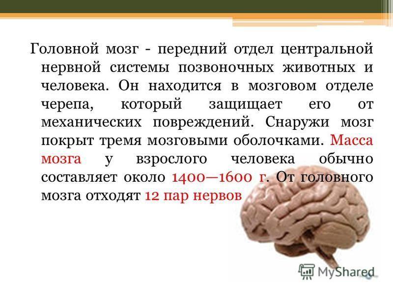 Головной мозг - передний отдел центральной нервной системы позвоночных животных и человека. Он находится в мозговом отделе черепа, который защищает его от механических повреждений. Снаружи мозг покрыт тремя мозговыми оболочками. Масса мозга у взросло