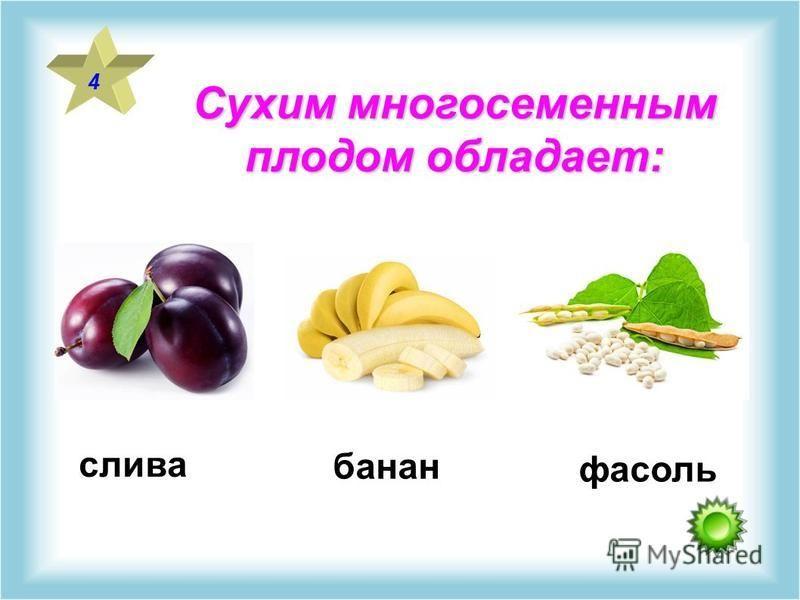 Сухим многосемянным плодом обладает: 4 слива фасоль банан