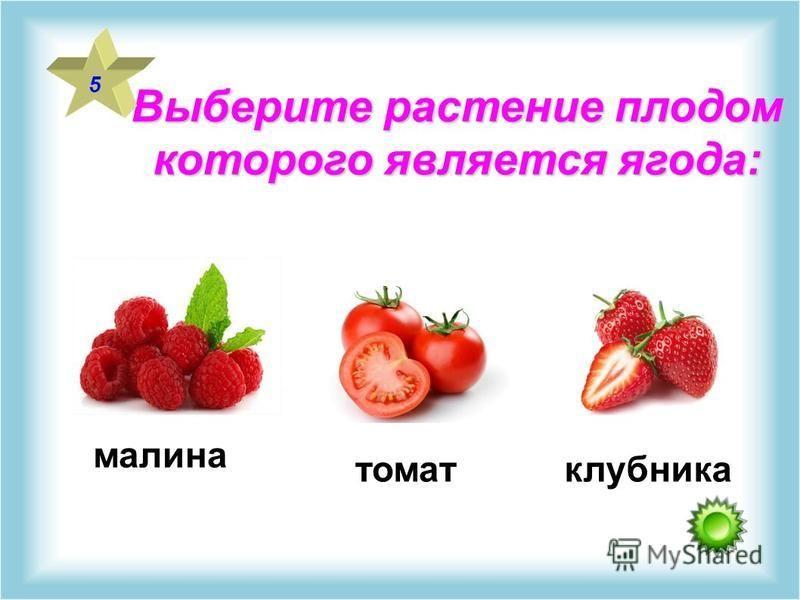 Выберите растение плодом которого является ягода: 5 малина томат клубника
