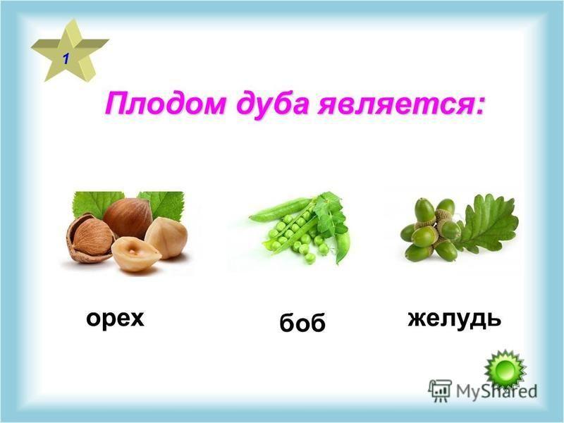 Плодом дуба является: 1 орех боб желудь