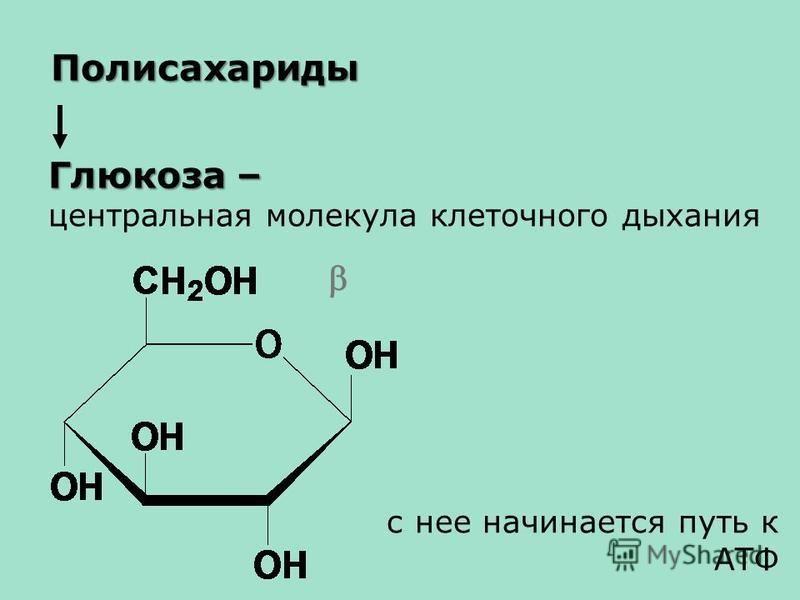 Глюкоза – центральная молекула клеточного дыхания Полисахариды с нее начинается путь к АТФ