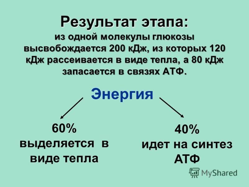 60% выделяется в виде тепла 40% идет на синтез АТФ Энергия Результат этапа: из одной молекулы глюкозы высвобождается 200 к Дж, из которых 120 к Дж рассеивается в виде тепла, а 80 к Дж запасается в связях АТФ.