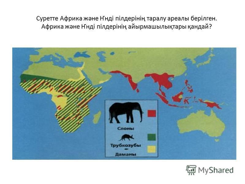 Суретте Африка және Ҥнді пілдерінің таралу ареалы берілген. Африка және Ҥнді пілдерінің айырмашылықтары қандай?
