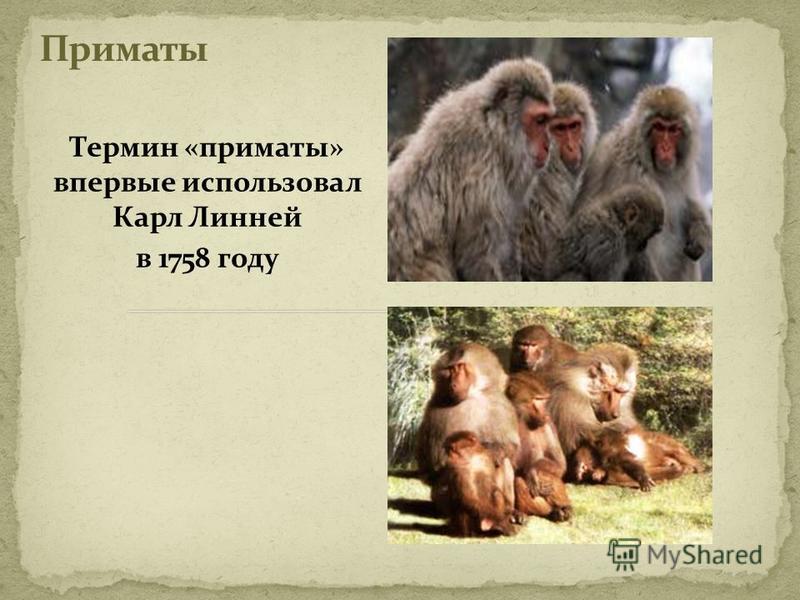 Термин «приматы» впервые использовал Карл Линней в 1758 году