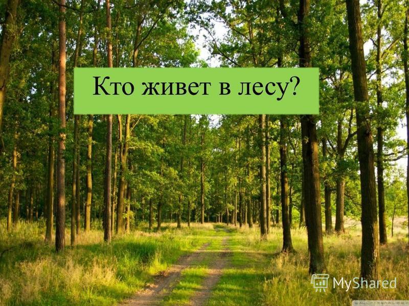 Здравствуй, лес, дремучий лес, Полный сказок и чудес! Ты о чем шумишь листвою Ночью темной, грозовою? Что там шепчешь на заре, Весь в росе как в серебре? Кто в глуши твоей таится? Что за зверь? Какая птица? Все открой, не утаи: Ты же видишь – мы свои