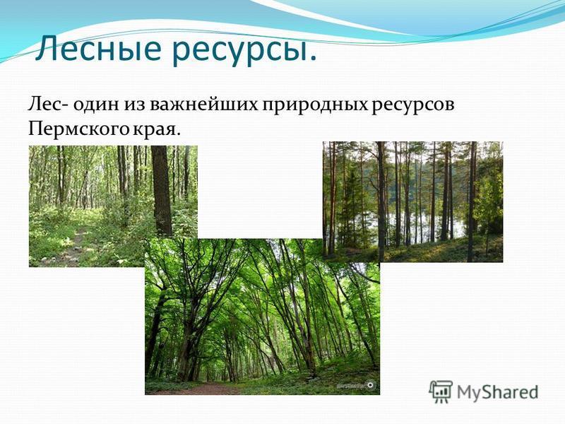 Лесные ресурсы. Лес- один из важнейших природных ресурсов Пермского края.