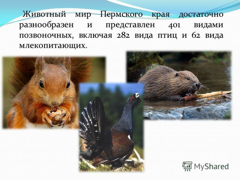 Животный мир Пермского края достаточно разнообразен и представлен 401 видами позвоночных, включая 282 вида птиц и 62 вида млекопитающих.