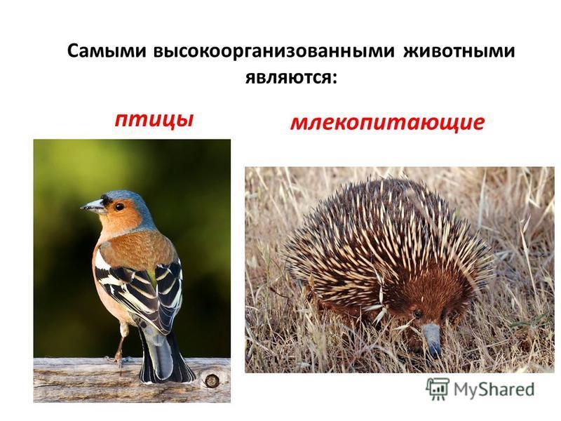 Самыми высокоорганизованными животными являются: птицы млекопитающие