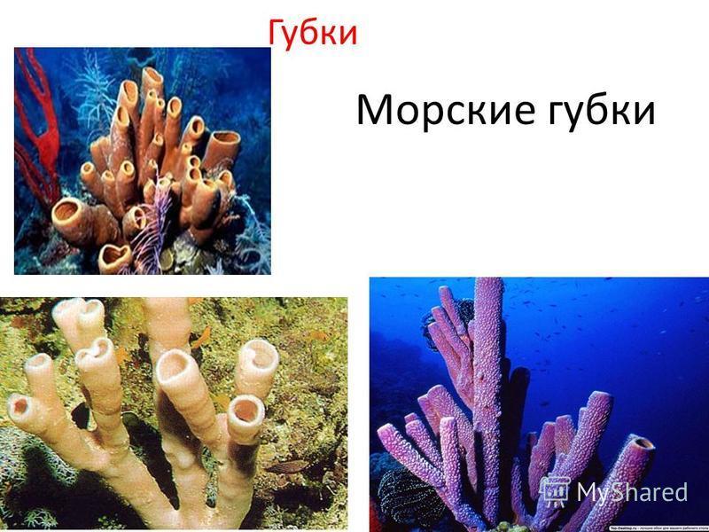 Губки Морские губки