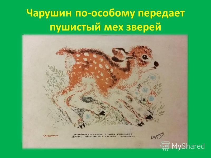Чарушин по-особому передает пушистый мех зверей