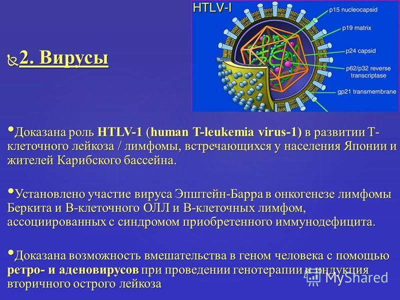 2. Вирусы 2. Вирусы Доказана роль HTLV-1 (human T-leukemia virus-1) в развитии Т- клеточного лейкоза / лимфомы, встречающихся у населения Японии и жителей Карибского бассейна. Доказана роль HTLV-1 (human T-leukemia virus-1) в развитии Т- клеточного л