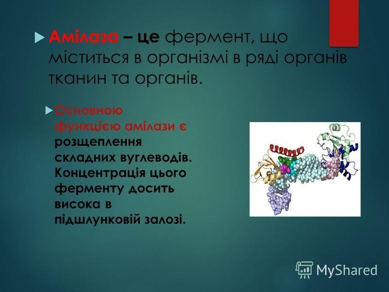 Амілаза – це фермент, що міститься в організмі в ряді органів тканин та органів. Основною функцією амілази є розщеплення складних вуглеводів. Концентрація цього ферменту досить висока в підшлунковій залозі.