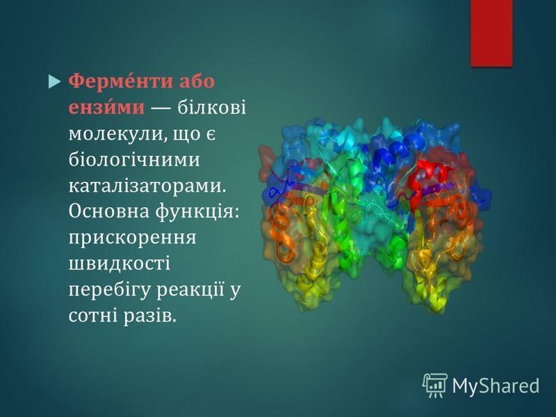 Ферме́нти або ензи́ми білкові молекули, що є біологічними каталізаторами. Основна функція: прискорення швидкості перебігу реакції у сотні разів.