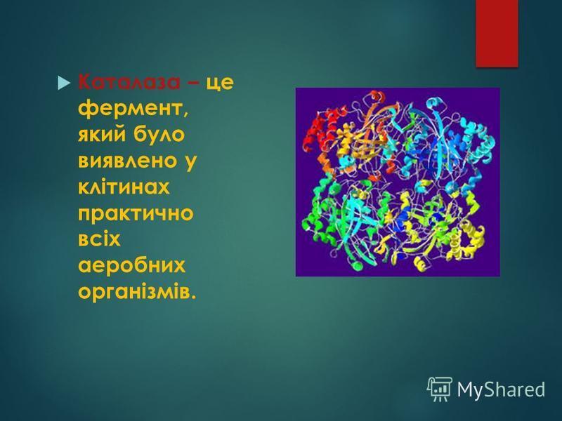 Каталаза – це фермент, який було виявлено у клітинах практично всіх аеробних організмів.