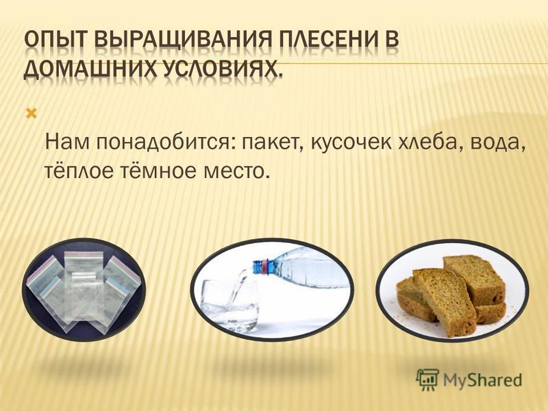 Нам понадобится: пакет, кусочек хлеба, вода, тёплое тёмное место.
