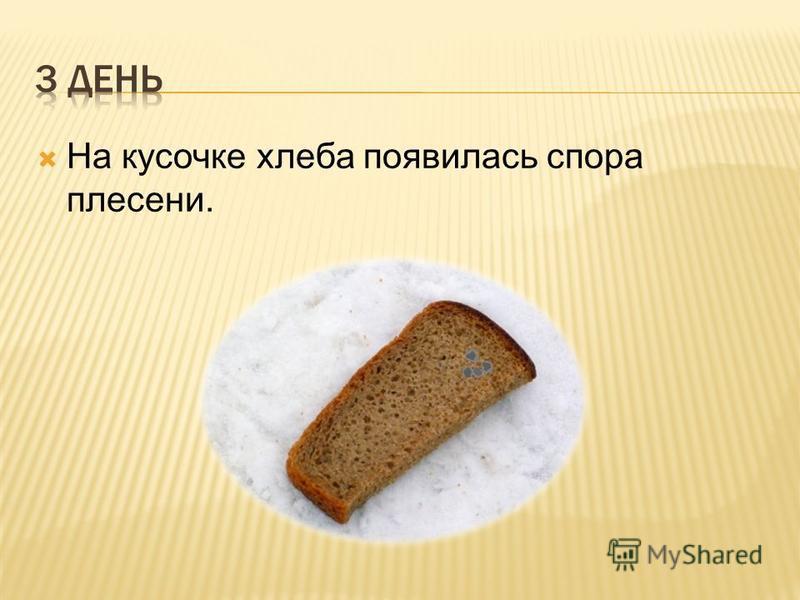 На кусочке хлеба появилась спора плесени.