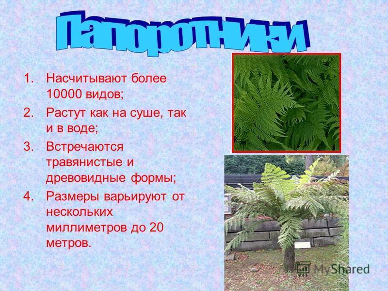 1. Насчитывают более 10000 видов; 2. Растут как на суше, так и в воде; 3. Встречаются травянистые и древовидные формы; 4. Размеры варьируют от нескольких миллиметров до 20 метров.