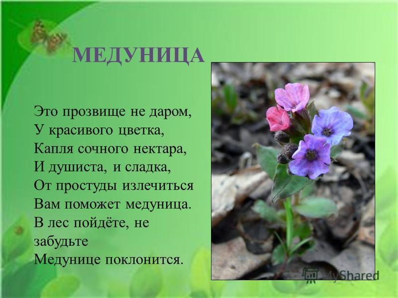 МЕДУНИЦА Это прозвище не даром, У красивого цветка, Капля сочного нектара, И душиста, и сладка, От простуды излечиться Вам поможет медуница. В лес пойдёте, не забудьте Медунице поклонится.